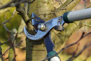 Find Tree Service Pros In Dayton Oh
